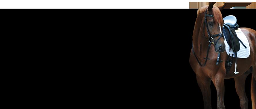 Sättel & Zubehör